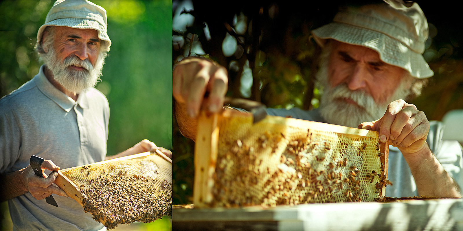 Organic bee keeping- Honey- Best food photography