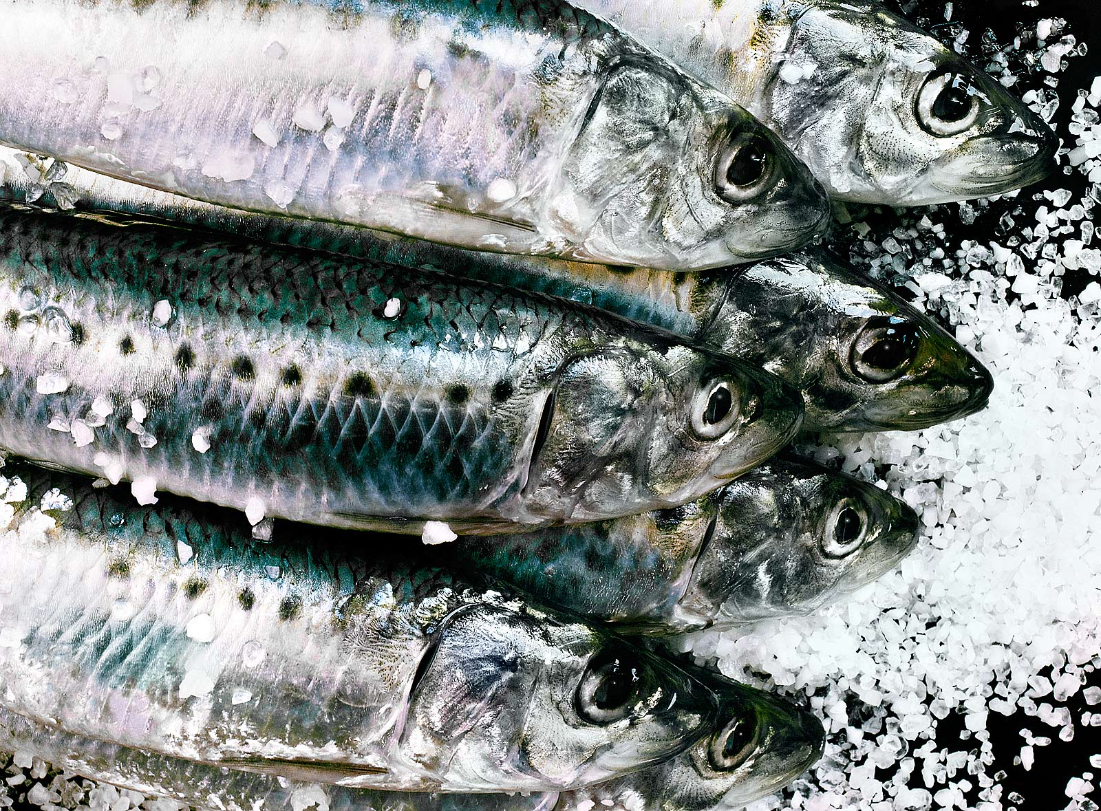 Sardinhas-Sardines-Sardinhada-Best food photography.